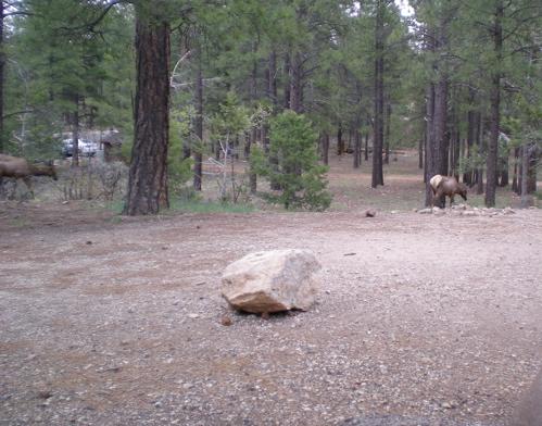 Cali caribou cropped